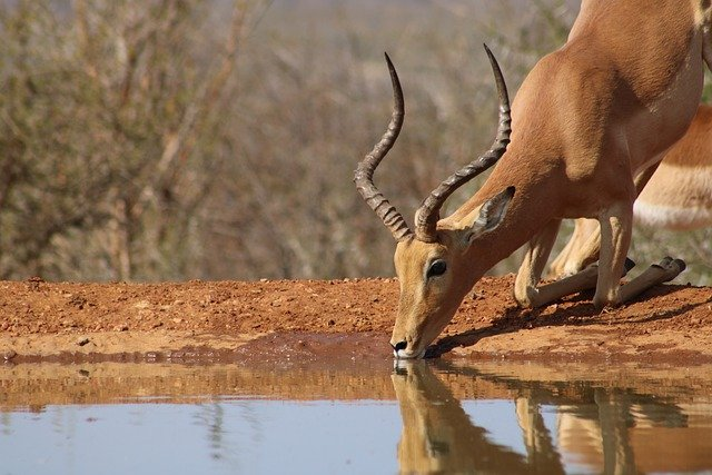 14 Day South Africa Safari Vacation
